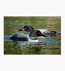 Two Loons Photographic Print