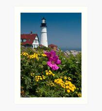 Beach Rose at Portland Head Art Print
