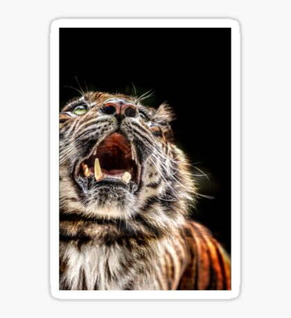 Tiger Tiger Burning Bright Sticker
