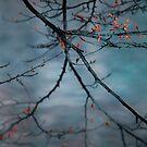 Bleeding tree by laurentlesax