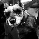 Best Friend by Alx-Iv