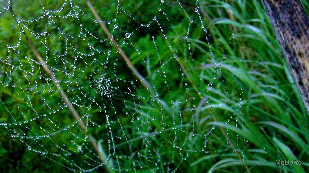 Web of Water by MeBoRe