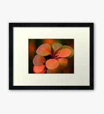 Soft Winter Colours Framed Print