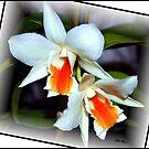 Orchid # 9 by Mattie Bryant
