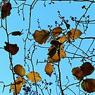 Last of the Autumn leaves. by ronsphotos