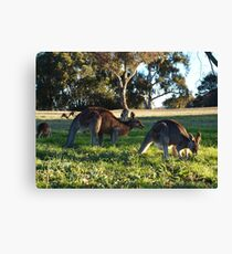 Sunday In The Park.   A C T Australia Canvas Print