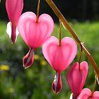 Bleeding Hearts 3926 by Martha Medford