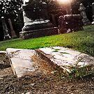 Magnolia Cemetery by Terri Chandler
