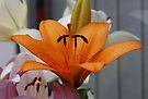 Orange Lily by AnnDixon