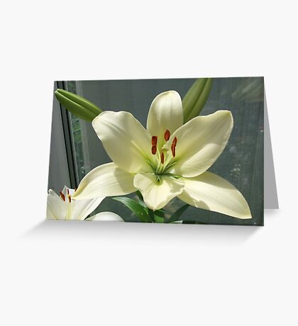 Off White Lily Greeting Card