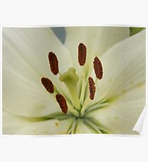 Yellow Lily Macro Poster
