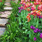 «Camino del tulipán» de Charmiene Maxwell-Batten