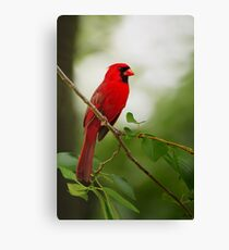 Summer Red Canvas Print