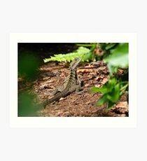 Lizard Hiding Art Print