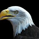 The American Eagle. by Brian Tarr