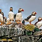Puffins Rock by Brian Tarr