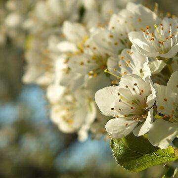 Hello Spring by thinkingoutloud