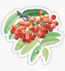 Rowan Sticker