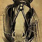 Heavy Horse by Kathryn Potempski