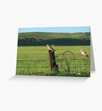 Fence sitters.. Greeting Card