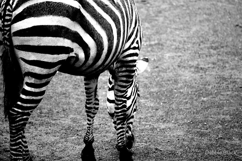 Zebra by Debbie Black