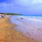 Beach Doggy by Mark Cassidy