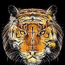 Zier-Tiger von frederic levy-hadida