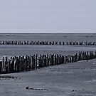 West coast of Denmark (3) by henrikn