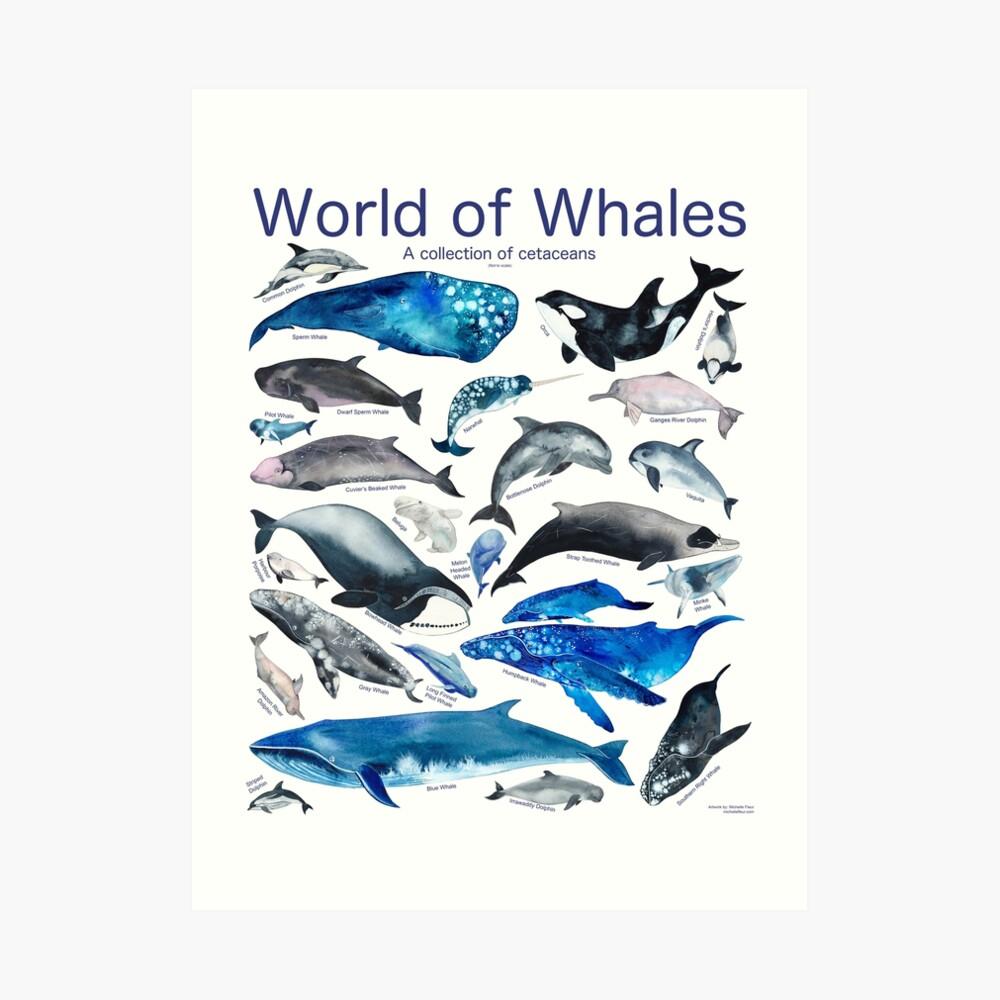 World of Whales Art Print