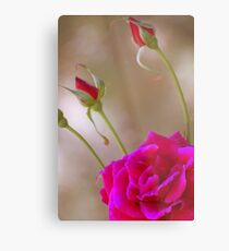 Rose & Buds Metal Print