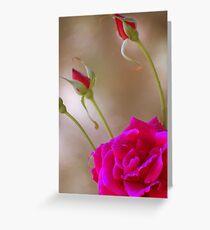 Rose & Buds Greeting Card