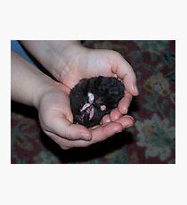 Hamster Dreams Photographic Print