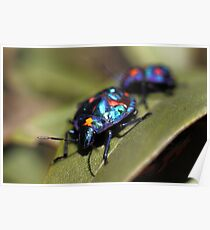 Pretty Blue Bugs Poster