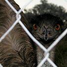 Old Man Emu by PhoenixArt