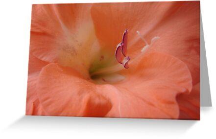 Dreamily Soft and Peachy........ by Sandra Cockayne