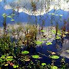 Clouds Accross the Lily Pads by paintingsheep