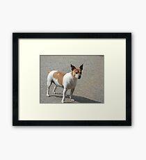 Rat Terrier Framed Print