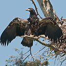 Bald Eagle Survivor by David Friederich