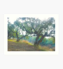 Views 3954***Olive trees. Zakintos. Greece. by Doctor Andrzej Goszcz.   Thanks  friends !!! Featured in Avant~Garde Art . Thanks !  Art Print