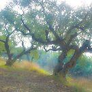 Views 3954***Olive trees. Zakintos. Greece. by Doctor Andrzej Goszcz.   Thanks  friends !!! Featured in Avant~Garde Art . Thanks !  by © Andrzej Goszcz,M.D. Ph.D