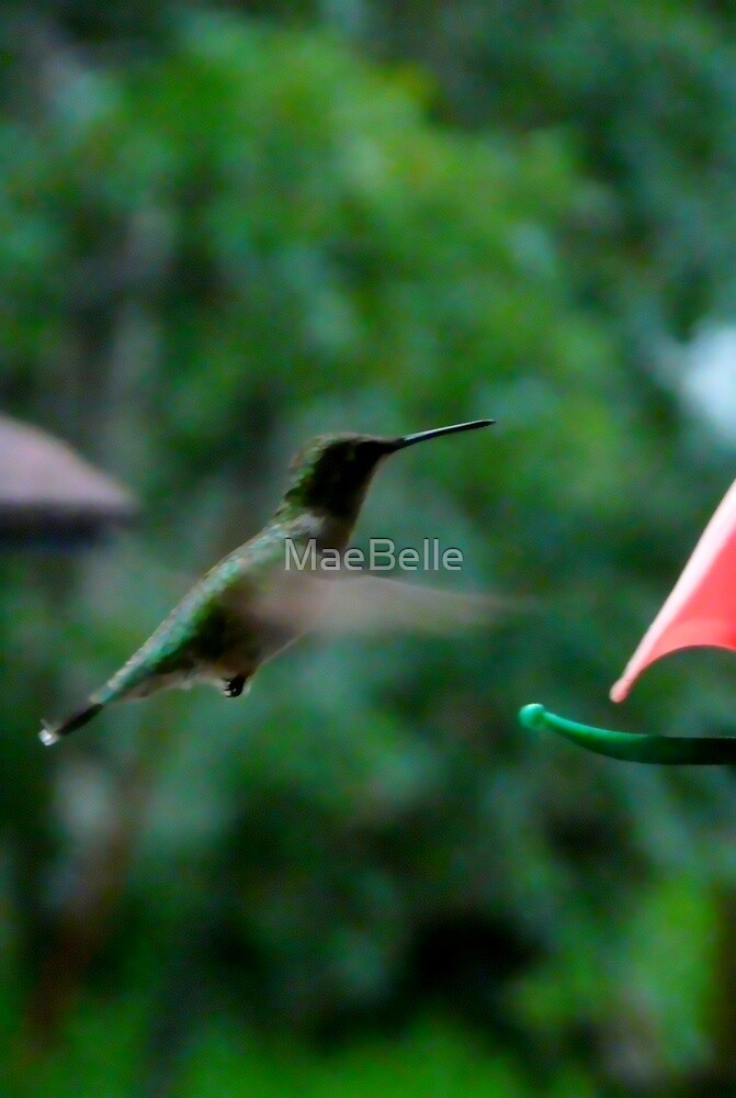 Coming In For A Landing by MaeBelle