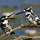 Bird talk! by Anthony Goldman