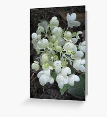 Little white flowers Greeting Card
