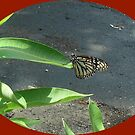 Butterfly Dancer by HardworkinJudy