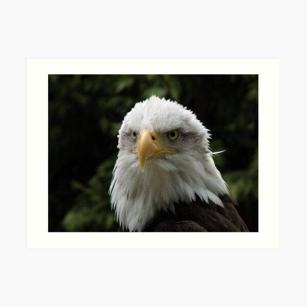 Eagle Portrait 2 Art Print
