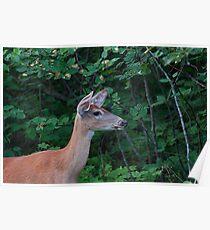 Deer Lady....! Poster