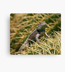 Clark's spiny lizard on a golden barrel cactus Canvas Print
