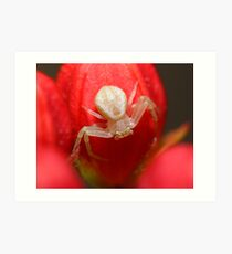 Crab spider hanging out on a flower Art Print