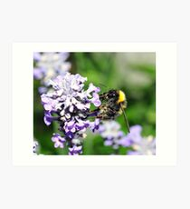 Peebles Bumblebee on Lavendar Art Print