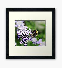 Peebles Bumblebee on Lavendar Framed Print